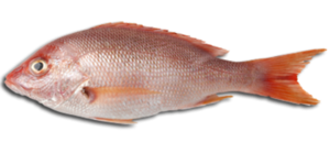 Fish Meat PNG Clip art
