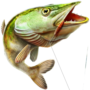 Fishing PNG Free Download PNG Clip art