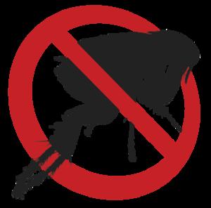 Flea Download PNG Image PNG Clip art