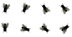 Flies PNG Photos PNG Clip art