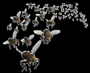 Flies PNG Pic PNG Clip art