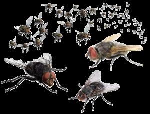 Flies PNG Transparent Image PNG Clip art