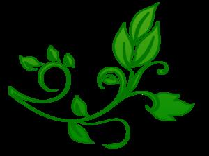 Floral PNG File PNG Clip art