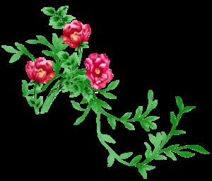 Floral PNG Image PNG Clip art