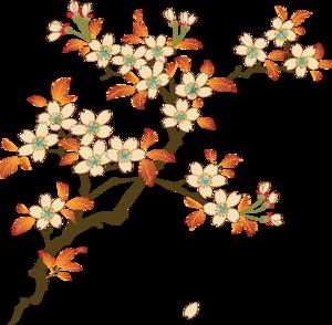 Floral PNG Photos PNG Clip art