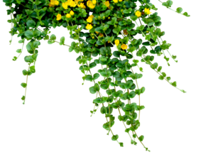 Flowers PNG Clipart PNG Clip art