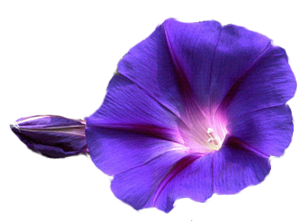 Flowers PNG Transparent Image PNG Clip art