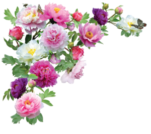Flowers Transparent PNG PNG Clip art