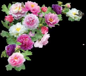 Flowers Transparent PNG PNG Clip art