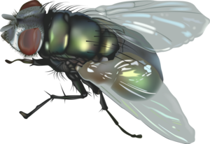 Fly PNG HD PNG Clip art