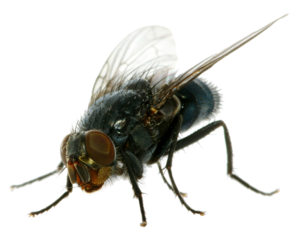 Fly PNG Pic PNG Clip art