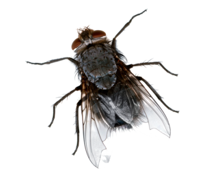 Fly PNG Picture PNG Clip art
