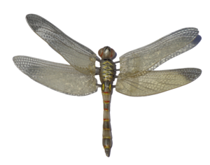 Fly Transparent PNG PNG Clip art