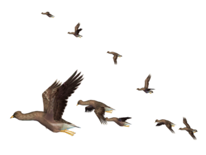 Flying Bird PNG Clipart PNG Clip art