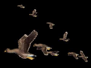 Flying Bird PNG Clipart PNG Clip art
