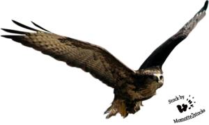 Flying Bird PNG Free Download PNG Clip art