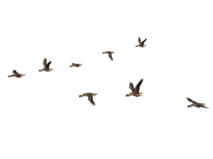 Flying Bird PNG Photos PNG Clip art