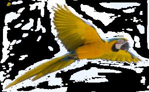 Flying Bird Transparent Background PNG Clip art
