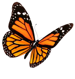 Flying Butterflies PNG Transparent Image PNG Clip art