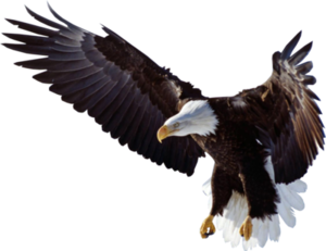 Flying Eagle PNG Clipart PNG Clip art
