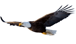 Flying Eagle PNG File PNG Clip art