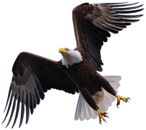 Flying Eagle PNG HD PNG Clip art