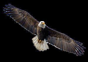 Flying Eagle PNG Image PNG Clip art