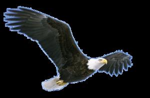 Flying Eagle PNG Pic PNG Clip art