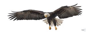 Flying Eagle PNG Transparent Image PNG clipart