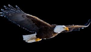 Flying Eagle Transparent Background PNG Clip art