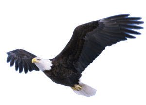 Flying Eagle Transparent PNG PNG Clip art