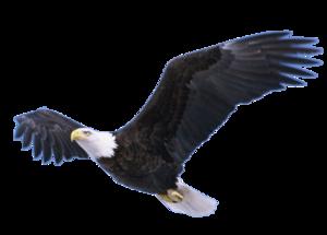 Flying Eagle Transparent PNG PNG Clip art