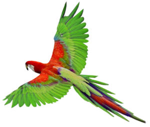 Flying Parrot PNG Clipart PNG Clip art