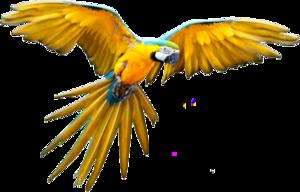 Flying Parrot PNG File PNG Clip art
