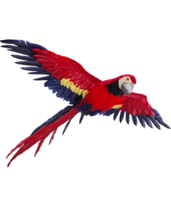Flying Parrot PNG Photos PNG Clip art