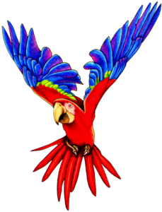 Flying Parrot PNG Pic PNG Clip art