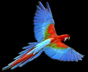 Flying Parrot PNG Transparent Image PNG Clip art