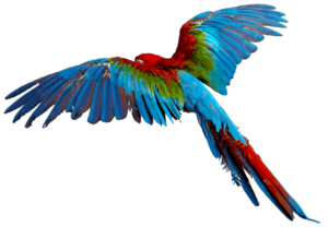 Flying Parrot Transparent Background PNG Clip art