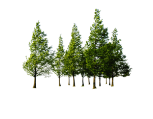 Forest PNG File Download Free PNG Clip art