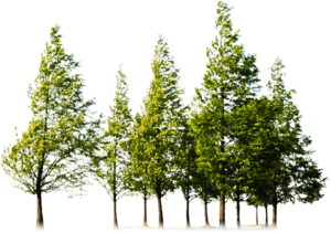 Forest PNG Image HD PNG Clip art