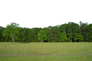 Forest PNG Pic Background PNG Clip art