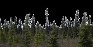 Forest PNG Transparent Background PNG Clip art