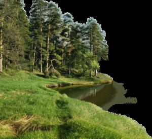 Forest PNG Transparent File PNG Clip art