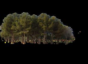 Forest PNG Transparent Image PNG Clip art