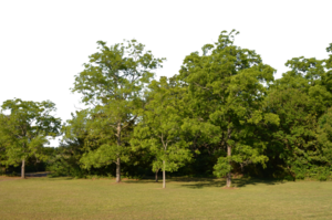 Forest PNG Transparent PNG Clip art