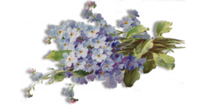 Forget Me Not PNG Free Download PNG Clip art