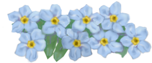 Forget Me Not PNG HD PNG Clip art