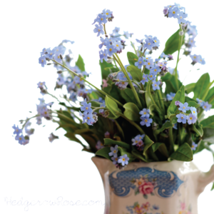 Forget Me Not PNG Pic PNG image