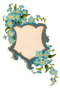 Forget Me Not PNG Picture PNG Clip art