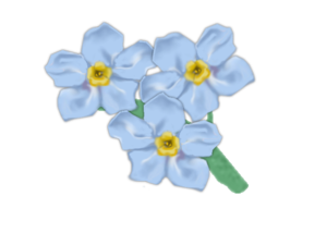 Forget Me Not PNG Transparent Picture PNG Clip art